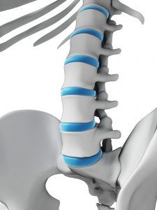 intervertebral discs of the lumbar spine